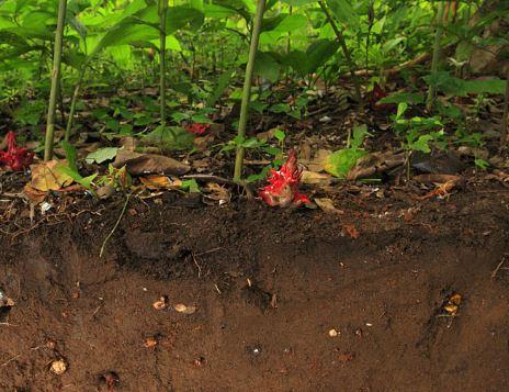 soil profile HKK