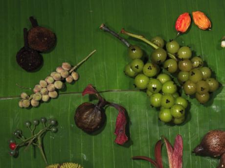 fruit from HKK