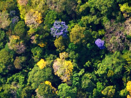 aerial view of canopy