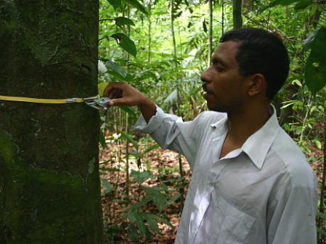 man measuring tree