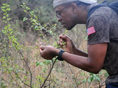 David Kenfack studying Grewia flowers at Mpala FDP.