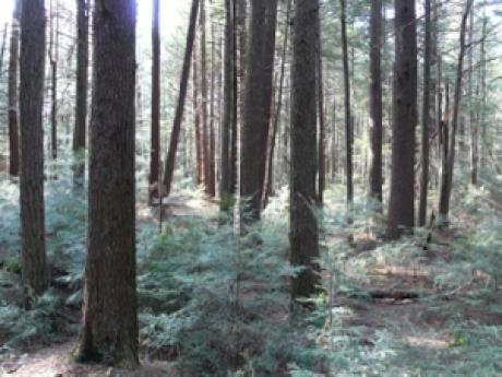 Harvard Forest, USA