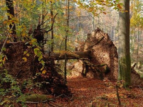 dead wood in czechia