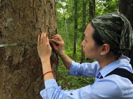 woman measuring tree