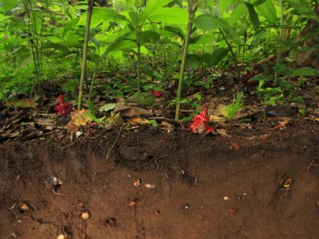 soil in HKK