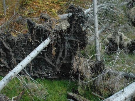 woody debris