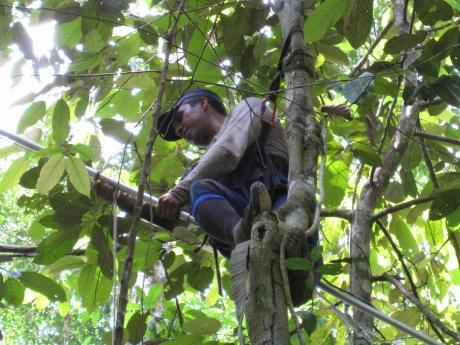 Manaus photo