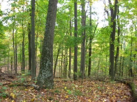 Lilly Dickey Woods forest