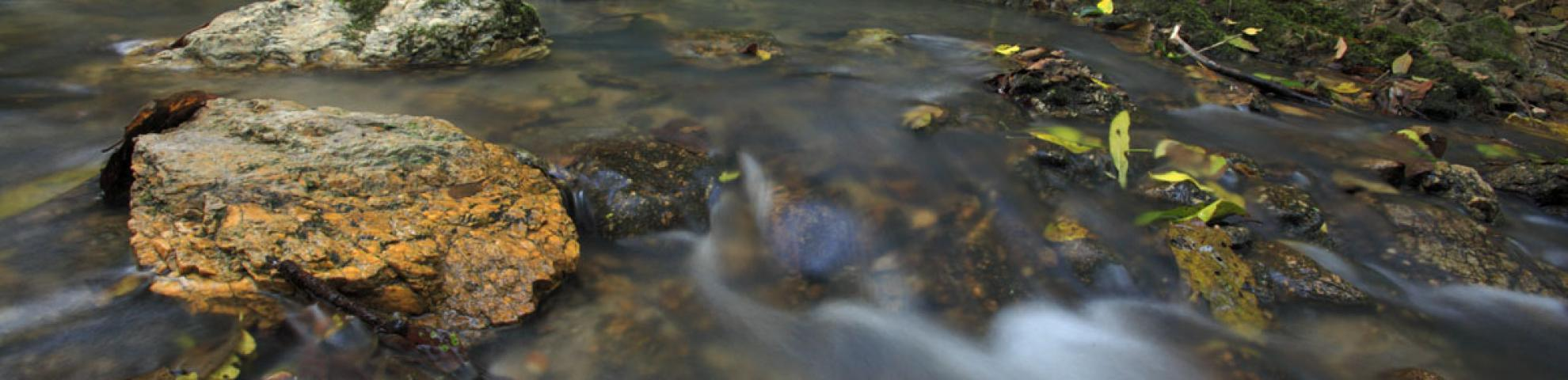 rocks and water in forest