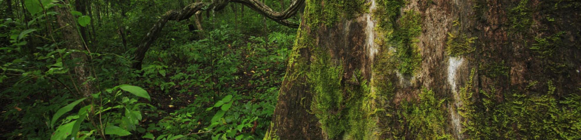 Tree in HKK plot