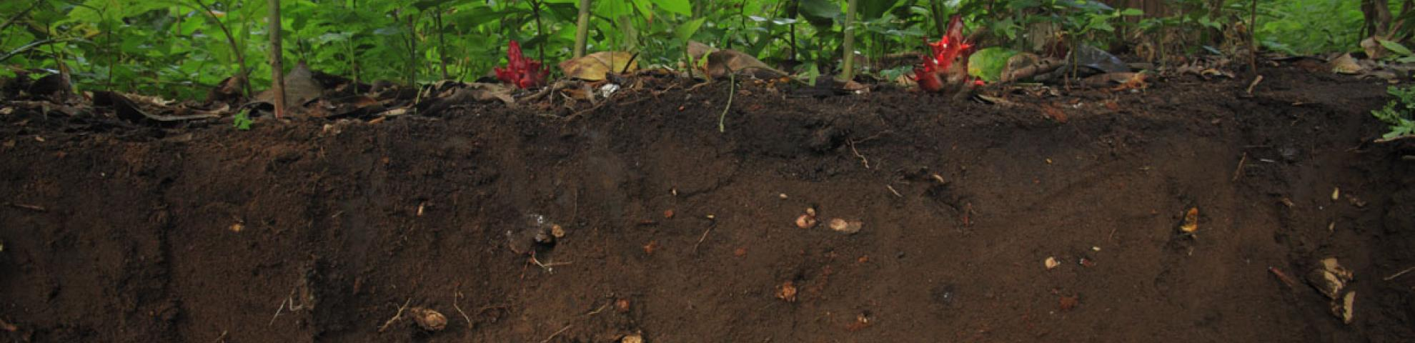 soil profile in a rainforest