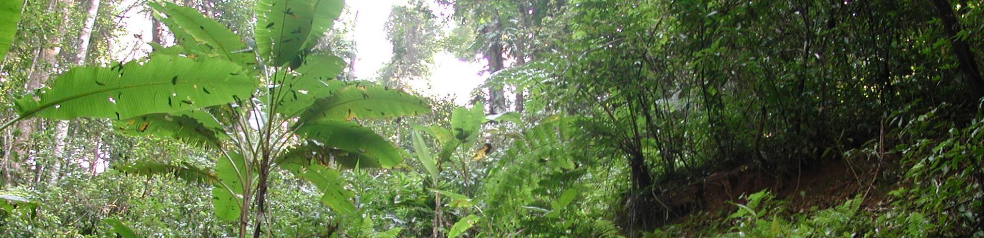 Xishuangbanna forest