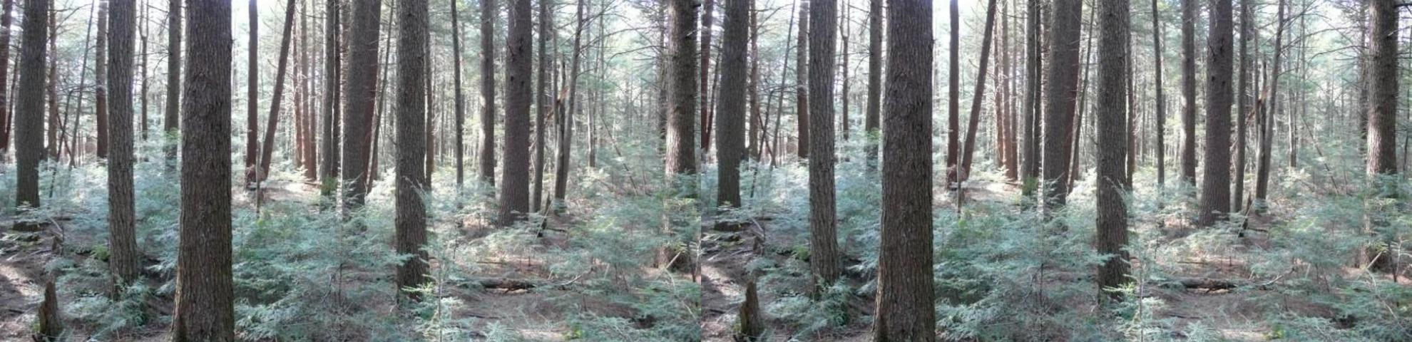 Harvard Forest