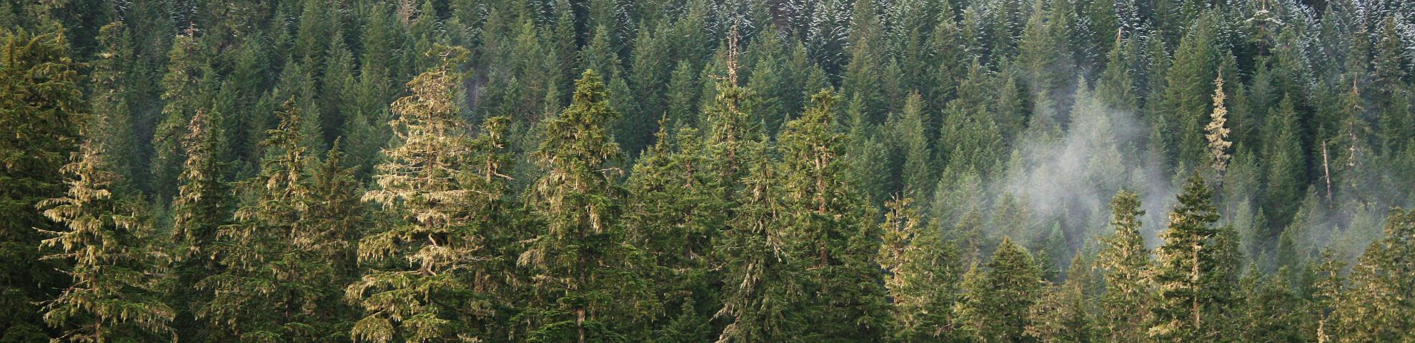 wind river forest dynamics plot